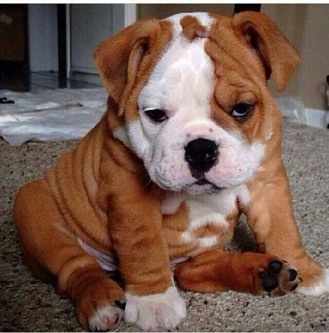 """Click visit site and Check out Best """"Bulldog"""" T-shirts. This website is top-notch. Tip: You can search """"your name"""" or """"your favorite shirts"""" at search bar on the top."""
