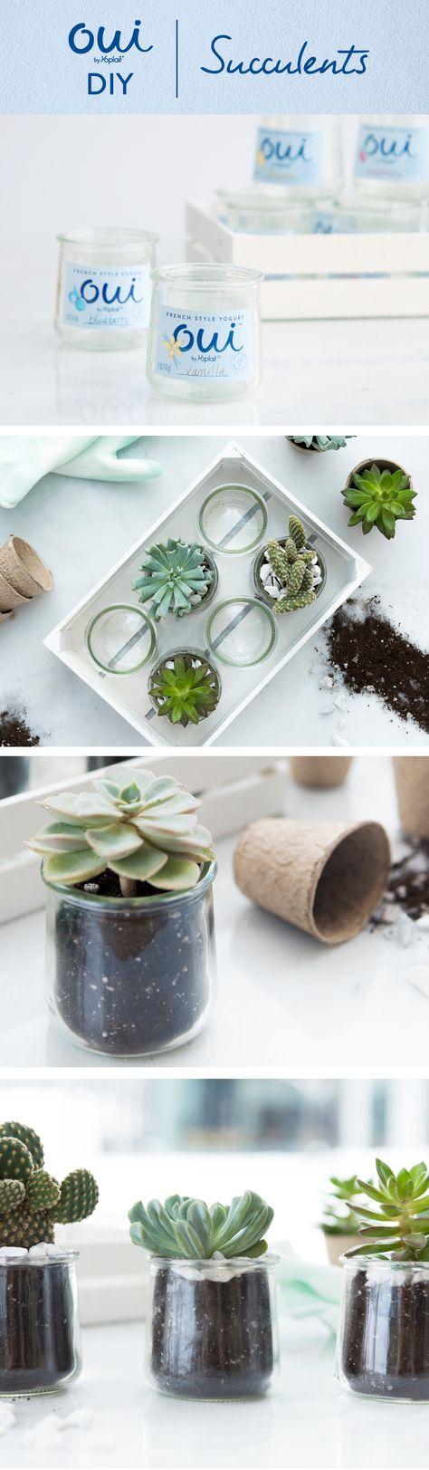 Oui by Yoplait DIY- Reuse Oui by Yoplait pots as planters for succulents.