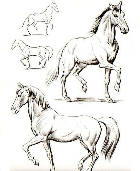 This Pin Was Discovered By Mar Como Dibujar Un Caballo Dibujos De Caballos Como Dibujar Animales
