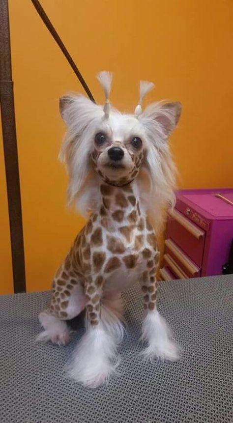 Sort of a giraffe!