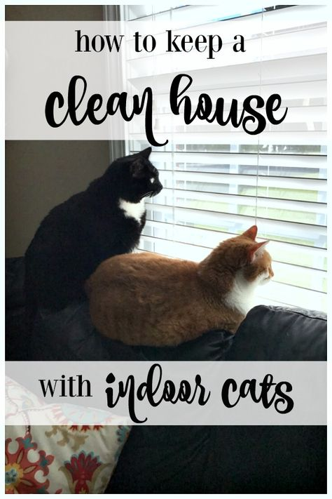 How To Keep A Clean House With Indoor Cats So halten Sie ein sauberes Haus mit Indoor-Katzen Grand Prix, Living With Cats, Cat Hacks, Cat Care Tips, Pet Care, Pet Tips, Kitten Care, Cat Room, Crazy Cats