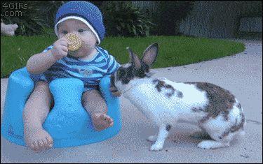 Bunny Yoink. gif .