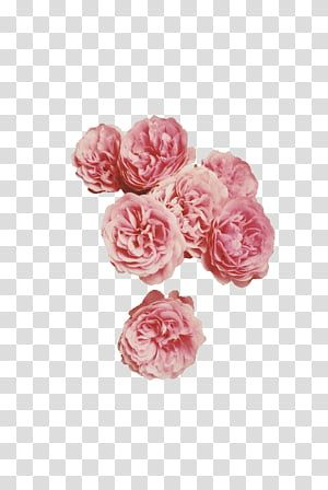 Aesthetic Grunge Pink Petaled Flowers Transparent Background Png Clipart Overlays Transparent Overlays Transparent Background Flower Illustration