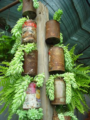 Simple, clever, textural #DIY vertical garden made fom old rusted tina cans. Luv.