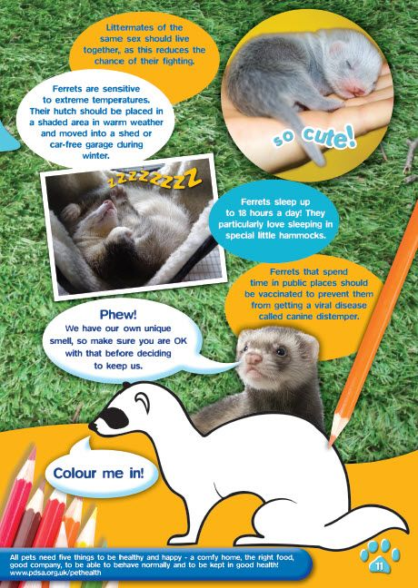 Freepetcareinfo Com Get Free Advice And Tips On Pets Care We Provide Useful Information Regarding Dogs Cats And Other Pet Animal Animal Antics Work With Animals Pets