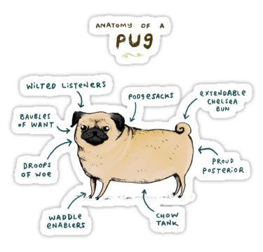 Anatomy Of A Pug Sticker By Sophie Corrigan Pugs Cute Pugs