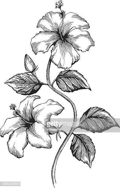 Hibiscus Ink Style Vector Drawing Bunga Kembang Sepatu Gambar Flora Dan Fauna Lukisan Bunga