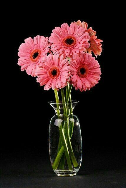 Pin By On Flowers Pretty Flowers Flower Wallpaper Flora Flowers