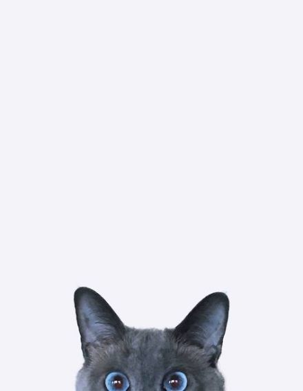 Cute Cat Wallpaper Aesthetic Iphone Cute Cat Wallpaper Iphone Backgrounds Are You Looking For Pastel Cat Wallpaper Funny Cat Photography Cat Wallpaper Cats Cat wallpaper images wallpaper