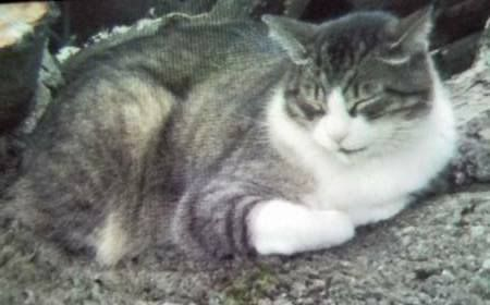 Lost Cat Waukesha Wisconsin Wi United States L42025 Lost