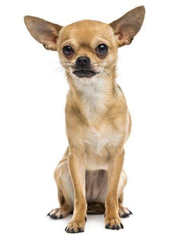 Register Your Emotional Support Animal Online Us Service Animals