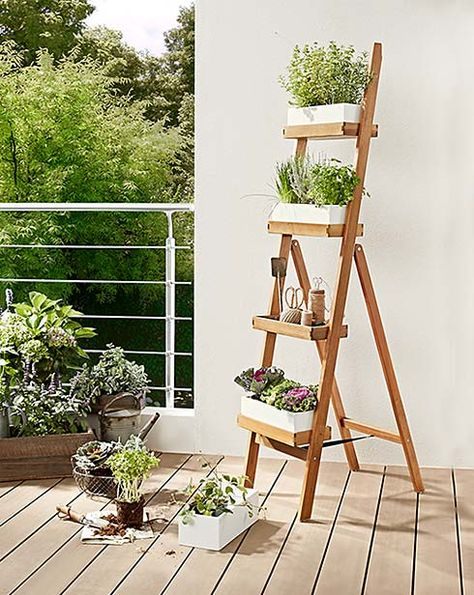 Kochzubehor Kuchenhelfer Amp Krauteranzucht Jetzt Bei Tchibo Garten Krautergarten Balkon Pflanzen