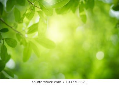 Closeup Nature View Of Green Leaf On Blurred Greenery