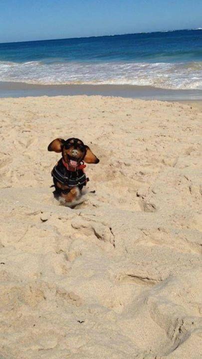 95 Dog Names Inspired By Greek Mythology Dachshund Puppies