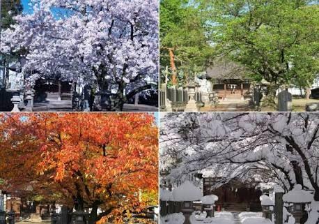 桜の木 春夏秋冬」の画像検索結果 | 桜の木, 木, 玄関