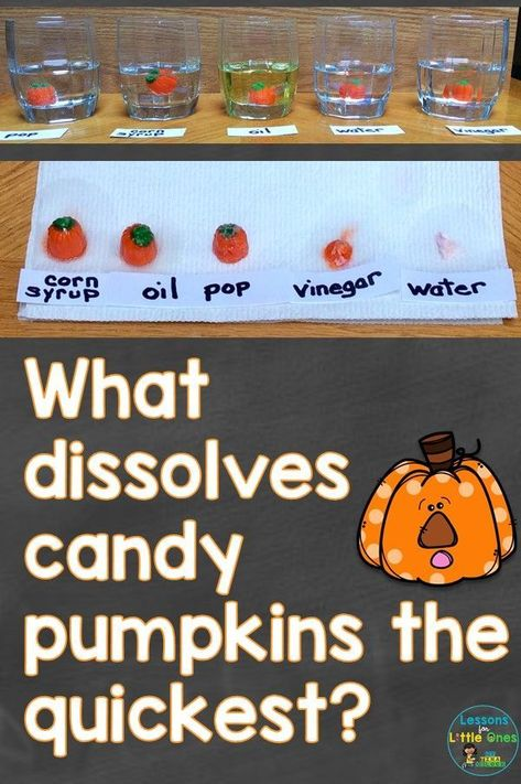 Pumpkin science experiment that tests what liquid dissolves candy pumpkins the quickest plus additional pumpkin science experiments & pumpkin STEM pumpkinscience pumpkinactivities pumpkinexperiment scienceforkids 394768723587385960 Preschool Science, Science Classroom, Science Fair, Teaching Science, Science For Kids, Science Activities, Summer Science, Science Chemistry, Science Symbols