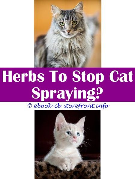 Spray To Stop Cat Licking