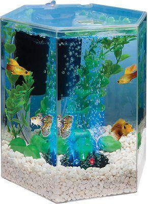 Tetra Hexagon Aquarium Kit With Led Bubbler 1 Gal Chewy Com Aquarium Kit Hexagon Fish Tank Beta Fish Tank
