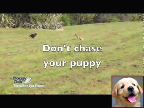Effective Ways For Puppy Behavior Training Puppy Behavior