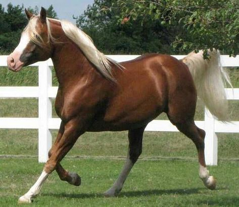 Chestnut horse cross stitch pattern, cross stitch pattern, horse cross stitch, horse pattern, brown