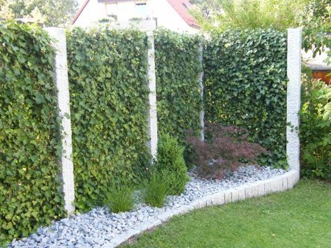 sichtschutz garten pflanzen Garten Pinterest Sichtschutz - garten pflanzen sichtschutz