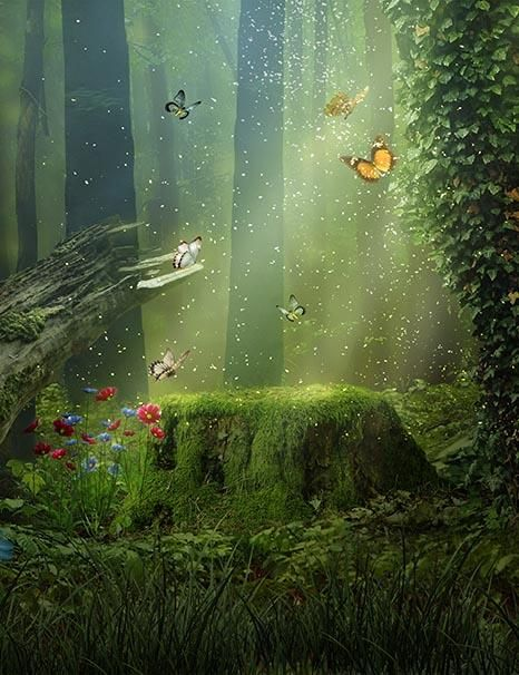 Lush Forest Butterfly And Tree Stump Photography Backdrop With