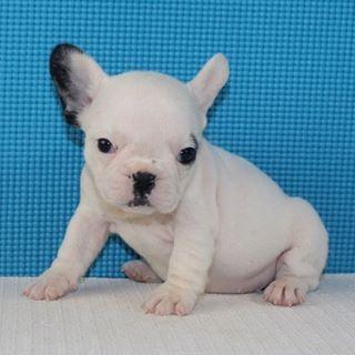 Pin Em Puppies