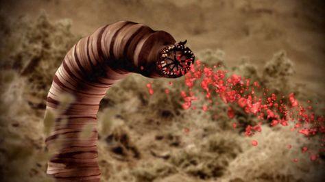 27 best Gobi féreg, gobi worm images on Pinterest Death - haus der küchen worms