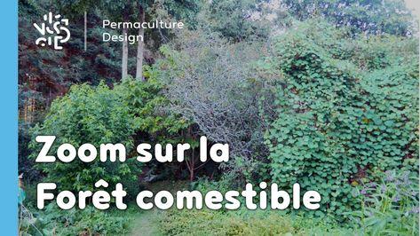 Zoom Sur La Foret Comestible Jardin Foret Foret Jardins