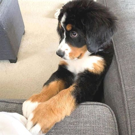 I M Saying Please With My Puppy Eyes Puppy Eyes Cute Puppy Breeds Puppies