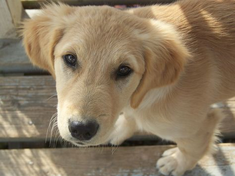 Pet Care During Diwali Try To Sensitize Your Pet To The Noises