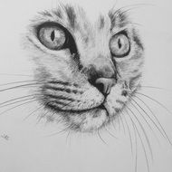 THIS IS AN ORIGINAL DRAWING OF A CLOSE UP OF A CATS HEAD SHOWING THE STRIKING EYES THAT SHE HAS. THE PICTURE MEASURES 10x10 INCHES IN SIZE  THE ACTUAL PAPER SIZE IS 16x11 INCHES. It will be shipped in a rolled cardboard tube