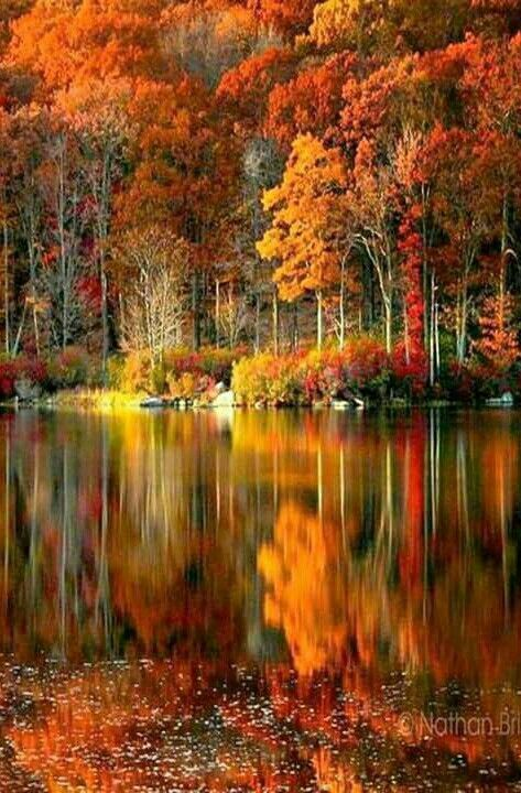 The Rich Colors Of Autumn Autumn Scenery Autumn Scenes Fall Pictures