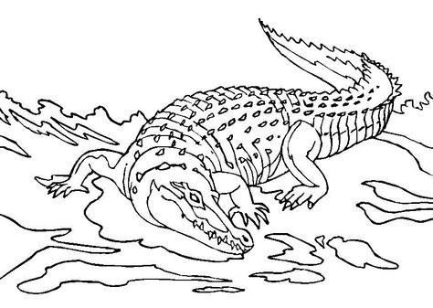 Crocodiles On The Prowl Gambar Lucu Gambar Warna