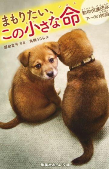 集英社みらい文庫 まもりたい この小さな命 動物保護団体アークの物語 の紹介ページです 動物保護 動物 里親