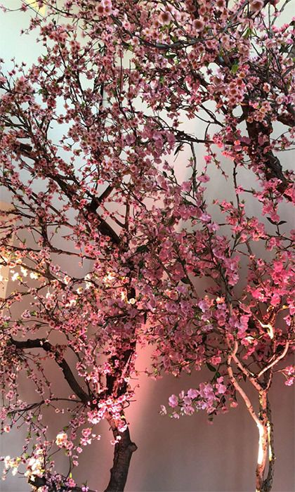 Pin By Jenny Chicago On Nature Photography Cherry Blooms Blossom Trees Beautiful Blooms