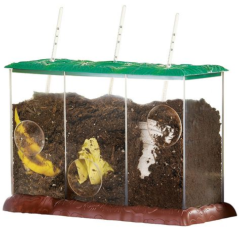 Educational Insights Now You See It, Now You Don't See-Through Compost Container Set - ShopStyle Science Kits, Science Fair Projects, Science Experiments, Teaching Science, School Projects, Teaching Kids, Compost Container, Amy, Environmental Education