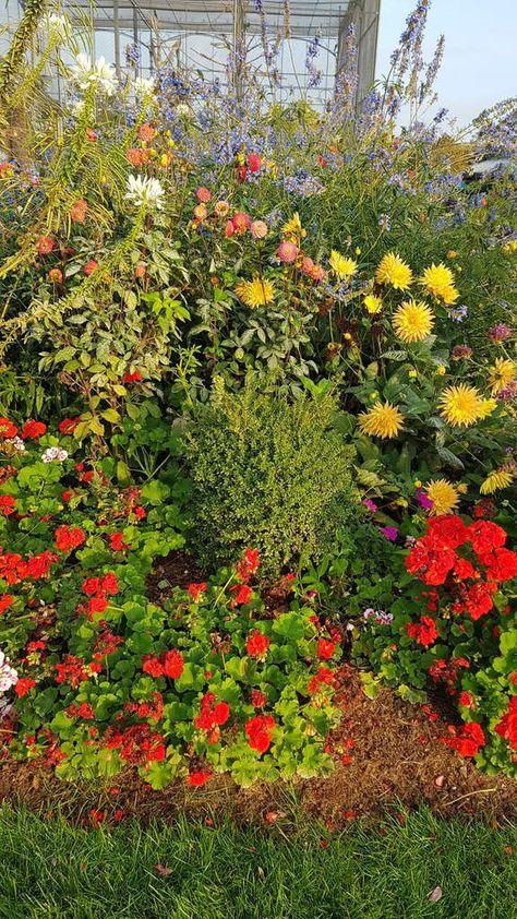 Jardin D Acclimatation Paris France Pictures Fleur Jardin