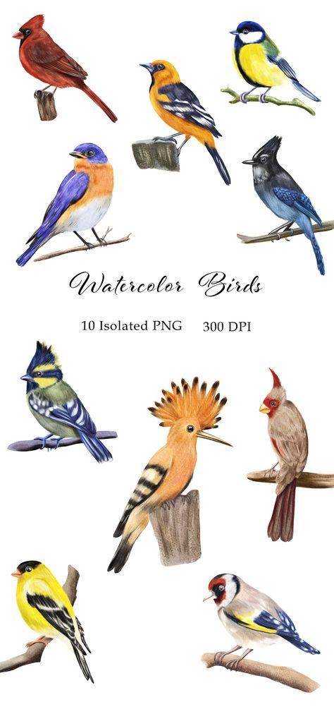 Watercolor Birds Clipart. Hand Painted Small Birds Set PNG (1345955) | Clipart | Design Bundles