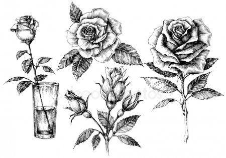 Kolekcja Elementow Zestaw Kwiatowy Wzor Roze Roses Drawing Rose Drawing Flower Drawing