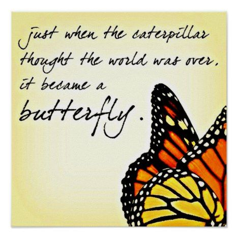 Butterfly Life Struggle Inspirational Quotes Poster Life Quotes