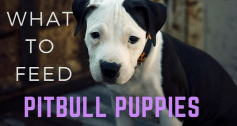 The Best Dog Food Pitbull Puppies Can Eat Pitbull Puppies Best