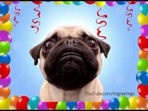 Happy Birthday Pug Funniest Birthday Song Youtube Pugs Funny