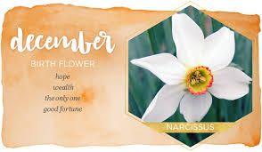 Image Result For December Birth Flower Birth Flowers December Birth Flower December Flower