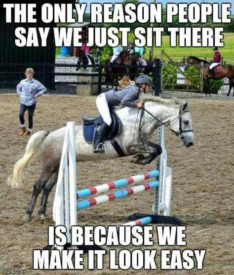 Equine Humor - Horses Funny - Funny Horse Meme - - Amen to that! The post Equine Humor appeared first on Gag Dad. Funny Horse Memes, Funny Horse Pictures, Funny Animal Jokes, Funny Horses, Cute Horses, Pretty Horses, Horse Love, Funny Animals, Funny Images
