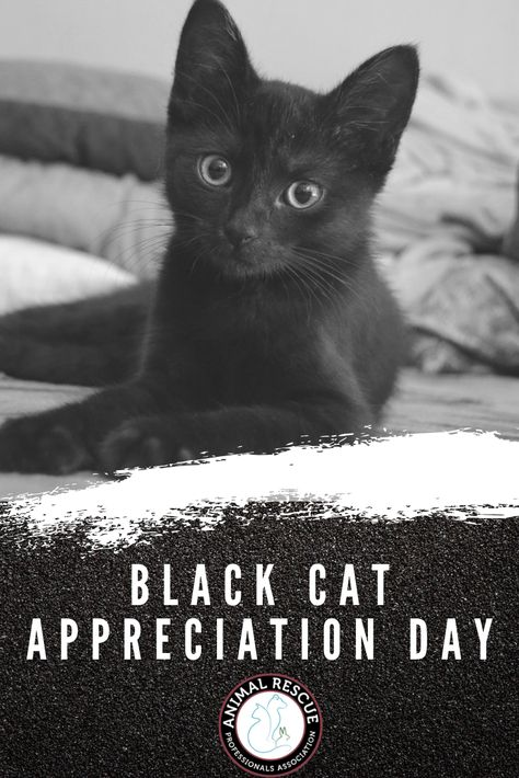 Black Cat Appreciation Day With Images Black Cat Appreciation Day Cats Black Cat