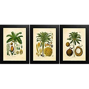 Set of 3 Ink Inc Palm Tropical Botanical Prints Vintage Wall Art Drawing 8x10