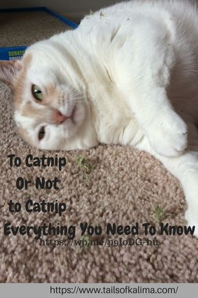 Catnip And Cats Everything You Need To Know Cat Reading Cats Cat Jokes