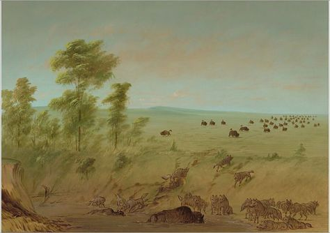 Mired Buffalo and Wolves, 1861/1869. Creator: George Catlin. A1 Poster. Mired Buffalo and Wolves, 1861/1869.