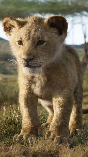 The Lion King 2019 Simba Zazu 4k3840x2160 Wallpaper